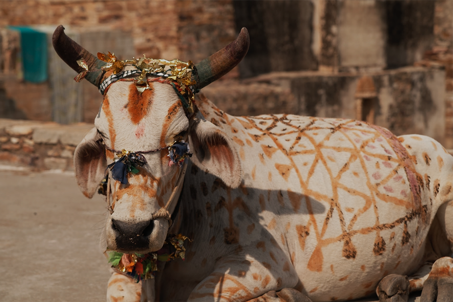 Outdated Traditions and Sacred Cows